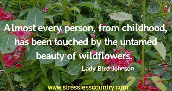 Almost every person, from childhood, has been touched by the untamed beauty of wildflowers.  Lady Bird Johnson