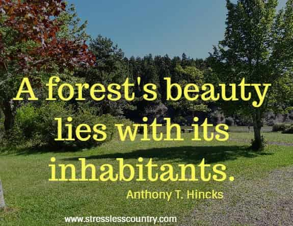 best forest quotes