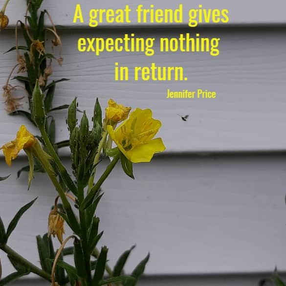 A great friend gives expecting nothing in return