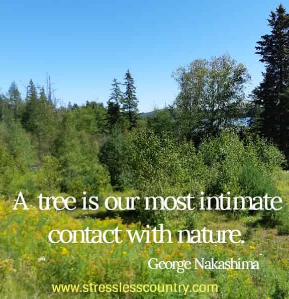 A tree is our most intimate contact with nature. George Nakashima