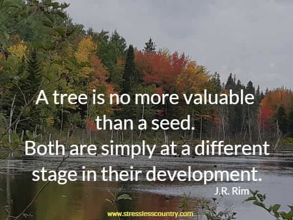 A tree is no more valuable than a seed. Both are simply at a different stage in their development.