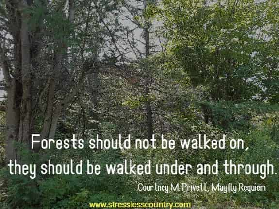 inspiring forest quotes