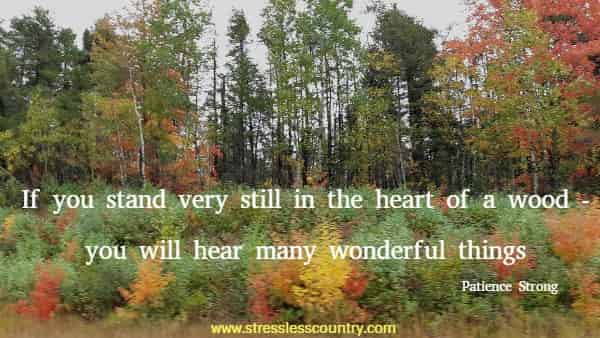 If you stand very still in the heart of a wood - you will hear many wonderful things