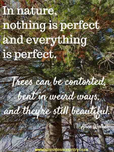 In nature, nothing is perfect and everything is perfect. Trees can be contorted, bent in weird ways, and they're still beautiful. Alice Walker
