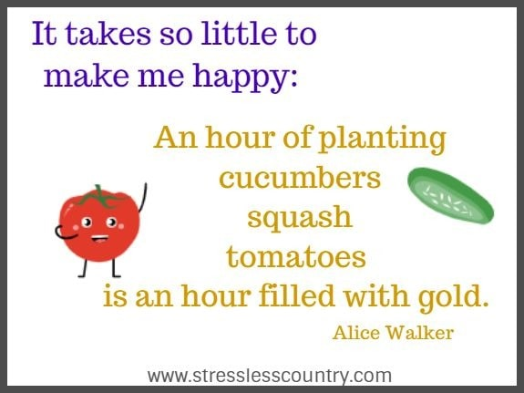 It takes so little to make me happy: An hour of planting cucumbers squash tomatoes is an hour filled with gold. Alice Walker