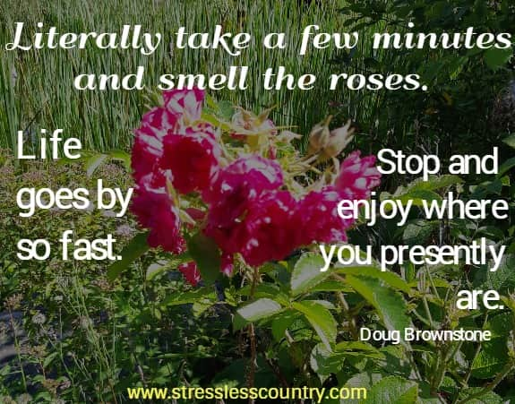 Literally take a few minutes and smell the roses. Life goes by so fast. Stop and enjoy where you presently are. Doug Brownstone