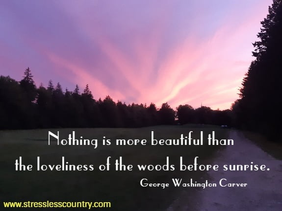 beautiful forest quotes