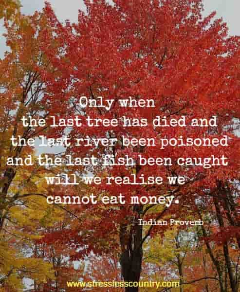 Only when the last tree has died and the last river been poisoned and the last fish been caught will we realise we cannot eat money.