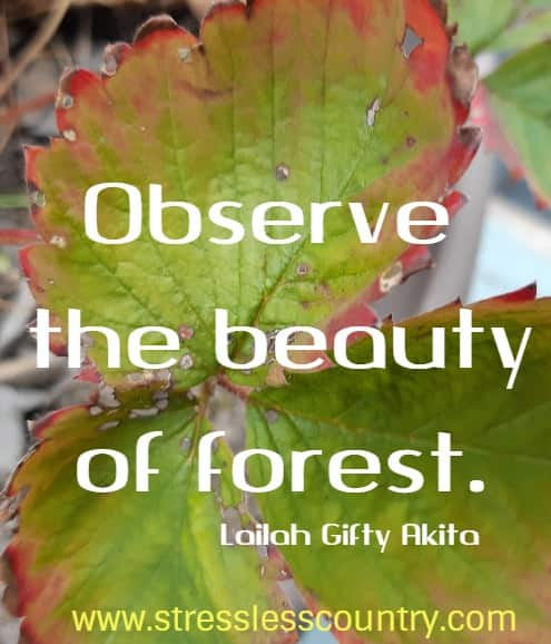 beauty of the forest