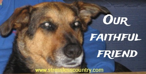 faithful friend poems