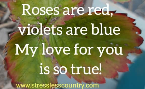 Roses are red, violets are blue My love for you is so true!