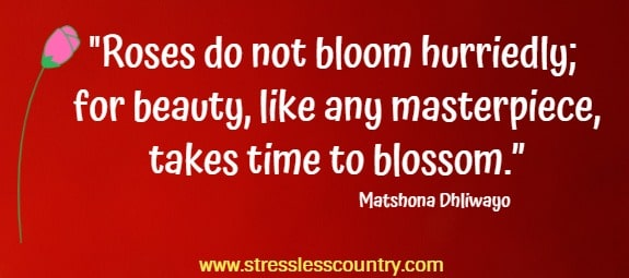 "Roses do not bloom hurriedly; for beauty, like any masterpiece, takes time to blossom.""   Matshona Dhliwayo"
