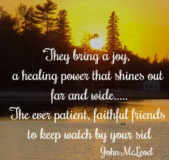 They bring a joy, a healing power that shines out far and wide....