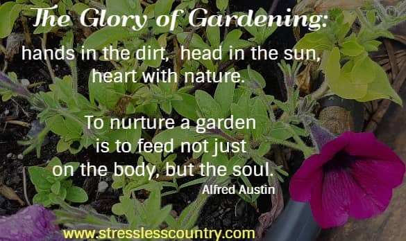The glory of gardening: hands in the dirt, head in the sun, heart with nature.  To nurture a garden is to feed not just on the body, but the soul.      Alfred Austin
