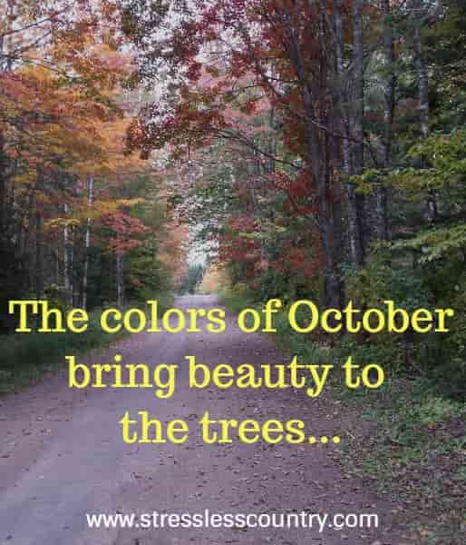 The colors of October bring beauty to the trees...