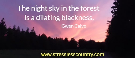 The night sky in the forest is a dilating blackness.   Gwen Calvo