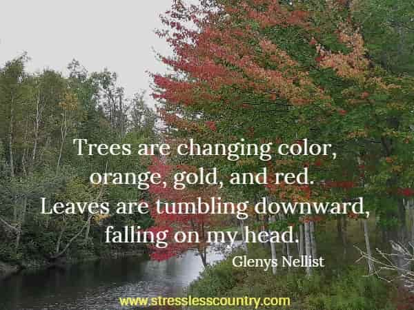Trees are changing color, orange, gold, and red. Leaves are tumbling downward, falling on my head.