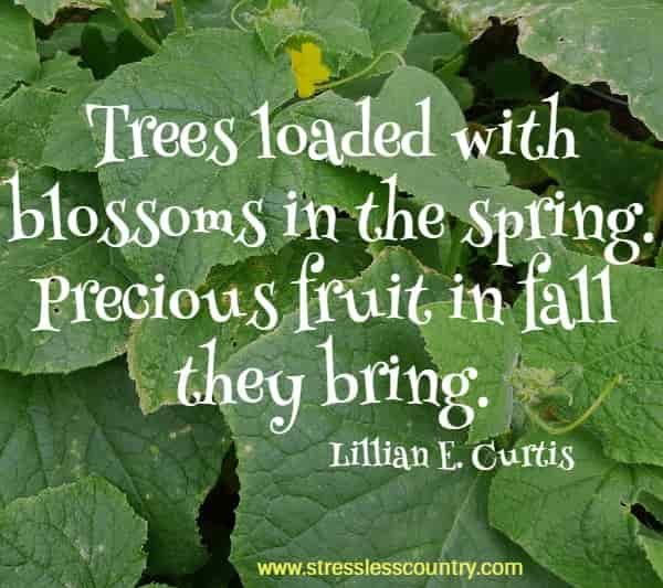 Trees loaded with blossoms in the spring. Precious fruit in fall they bring.