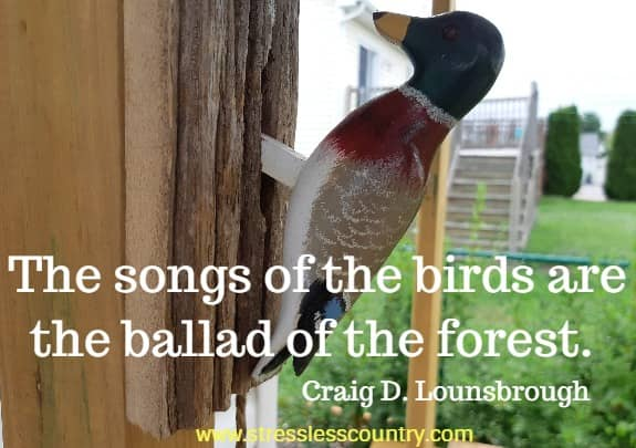 forest and nature quotes