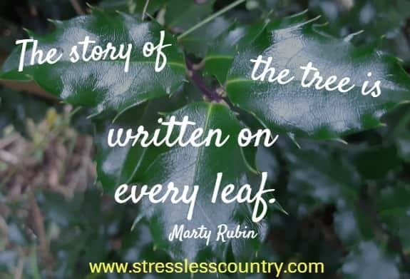 The story of the tree is written on every leaf.   Marty Rubin