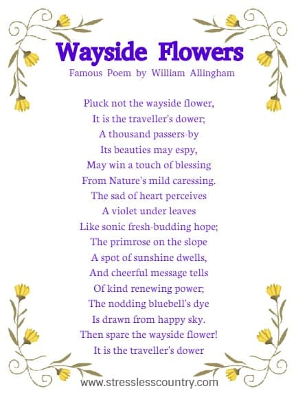 Wayside Flowers  Famous Poem by William Allingham Pluck not the wayside flower, It is the traveller's dower; A thousand passers-by Its beauties may espy, May win a touch of blessing From Nature's mild caressing. The sad of heart perceives A violet under leaves Like sonic fresh-budding hope; The primrose on the slope A spot of sunshine dwells, And cheerful message tells Of kind renewing power; The nodding bluebell's dye Is drawn from happy sky. Then spare the wayside flower! It is the traveller's dower.