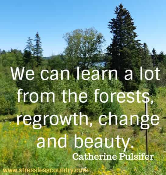 forest quotes that teach