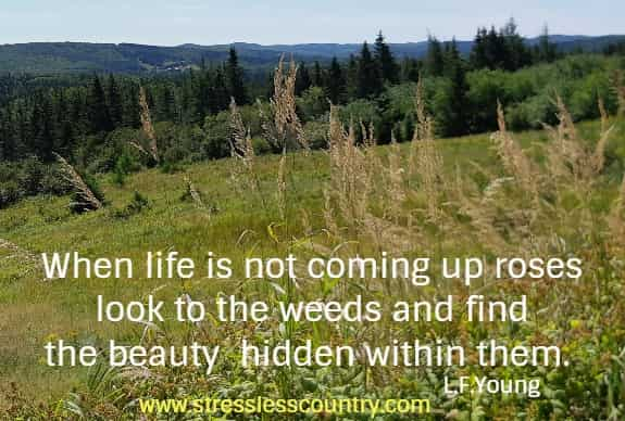 When life is not coming up roses look to the weeds and find the beauty  hidden within them.  L.F.Young