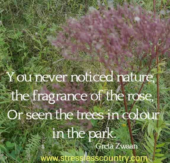 You never noticed nature, the fragrance of the rose, Or seen the trees in colour in the park. Greta Zwaan